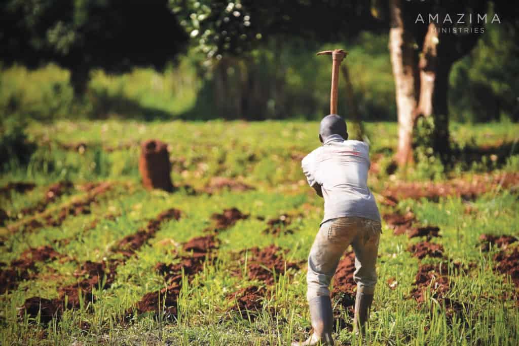 amazima-farming-2000×1333
