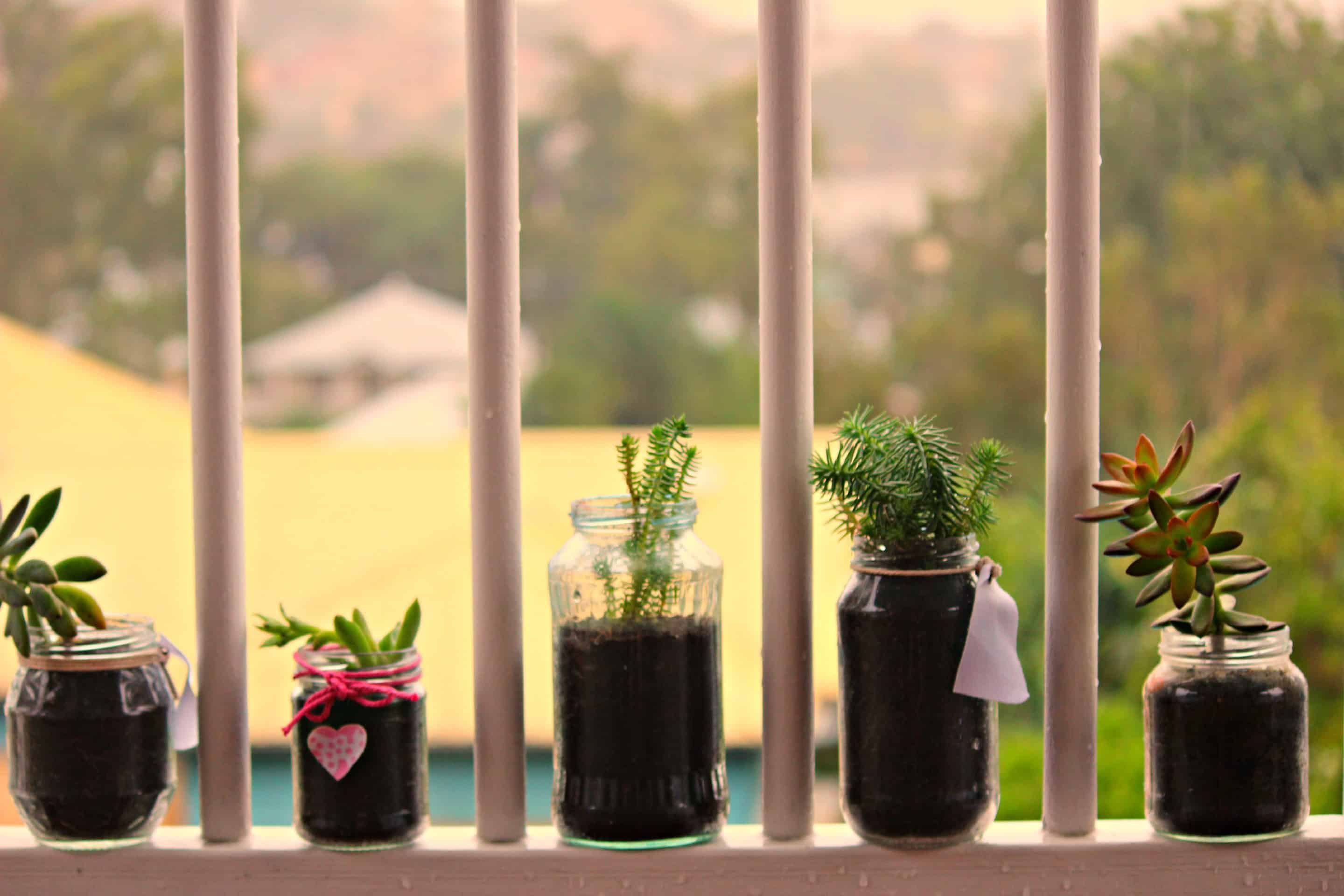 #TeamAmazima: Succulents Can Change Lives